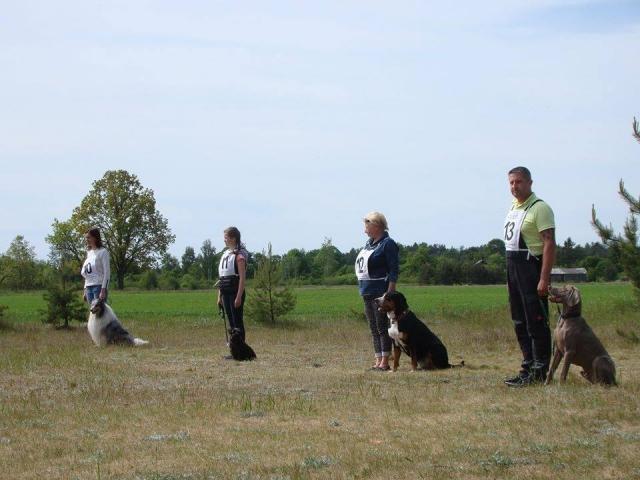 Rally Obedience Sports sacensības