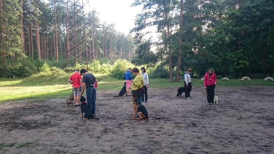 Suņu treniņi nodarbības apmācība