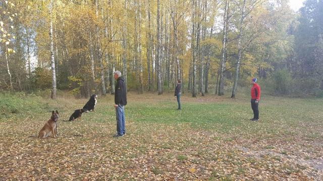 Suņu treneris nodarbība apmācības