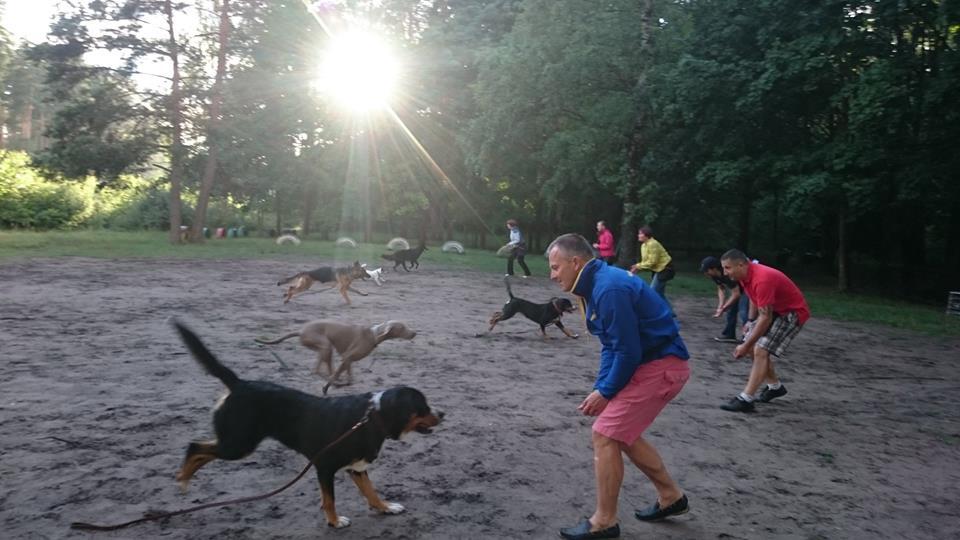Suņu apmācības piesaukšana