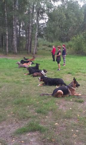 Suņu apmacibas
