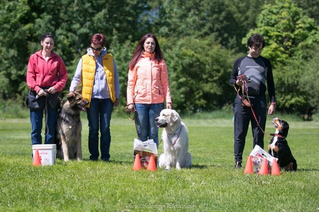 Elibird Dogs team sacensības
