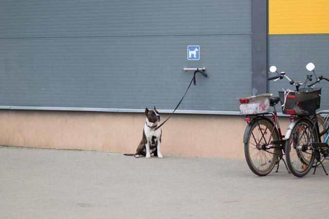 Suņu BH Begleithund