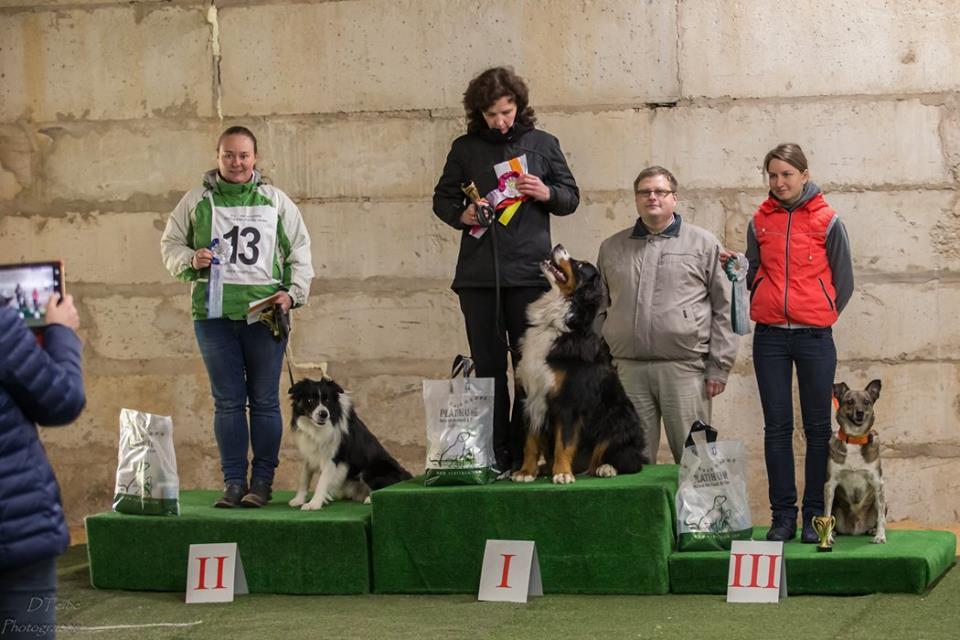 Bernes ganu suns Bernese Mountain dog