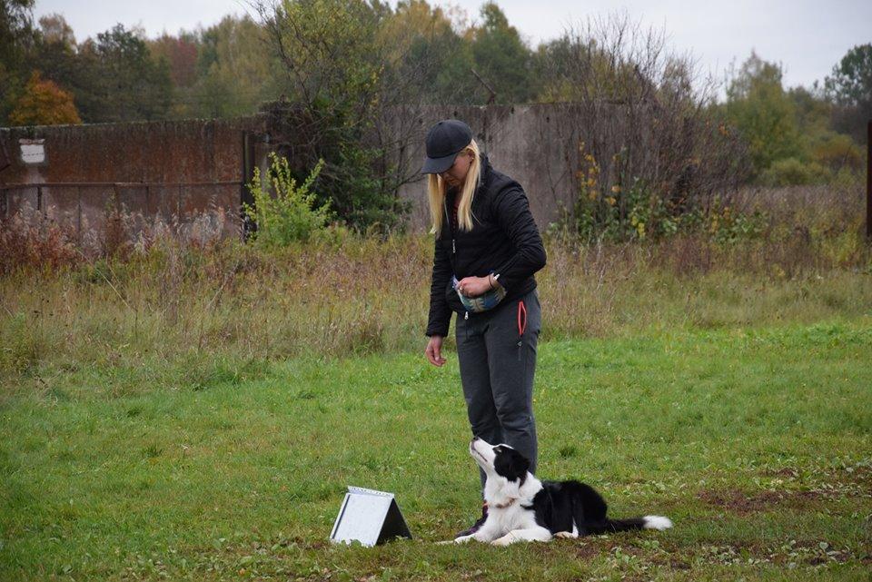 suņu treniņi