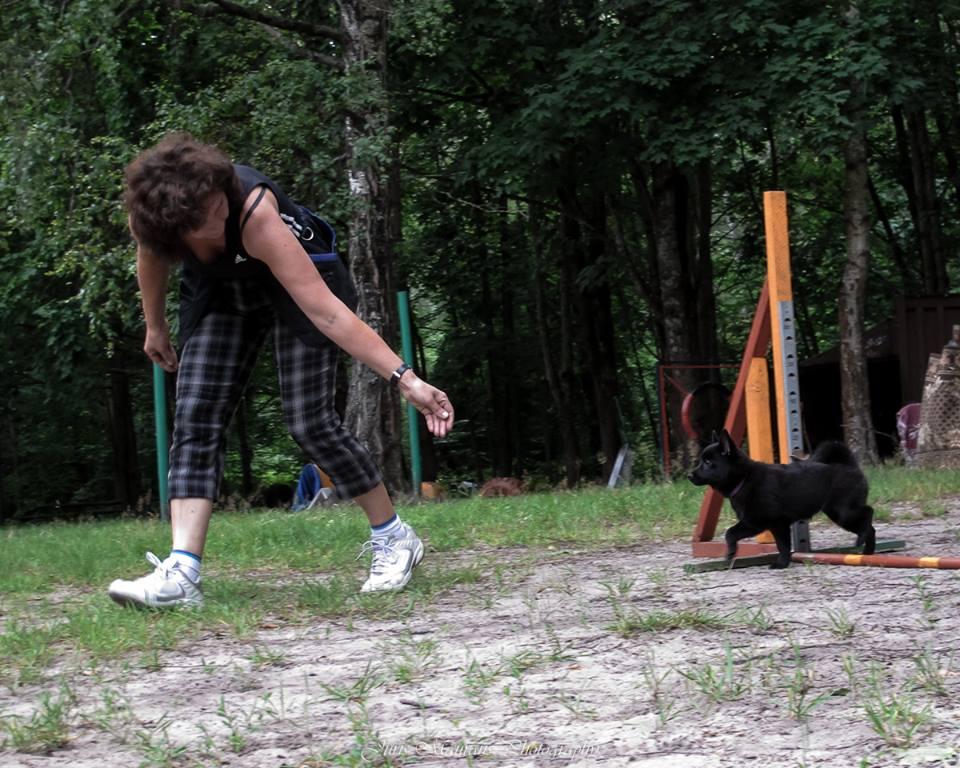 agility adžilitī suņu apmācības